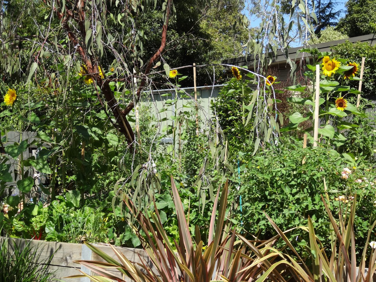 Sunflower view copy